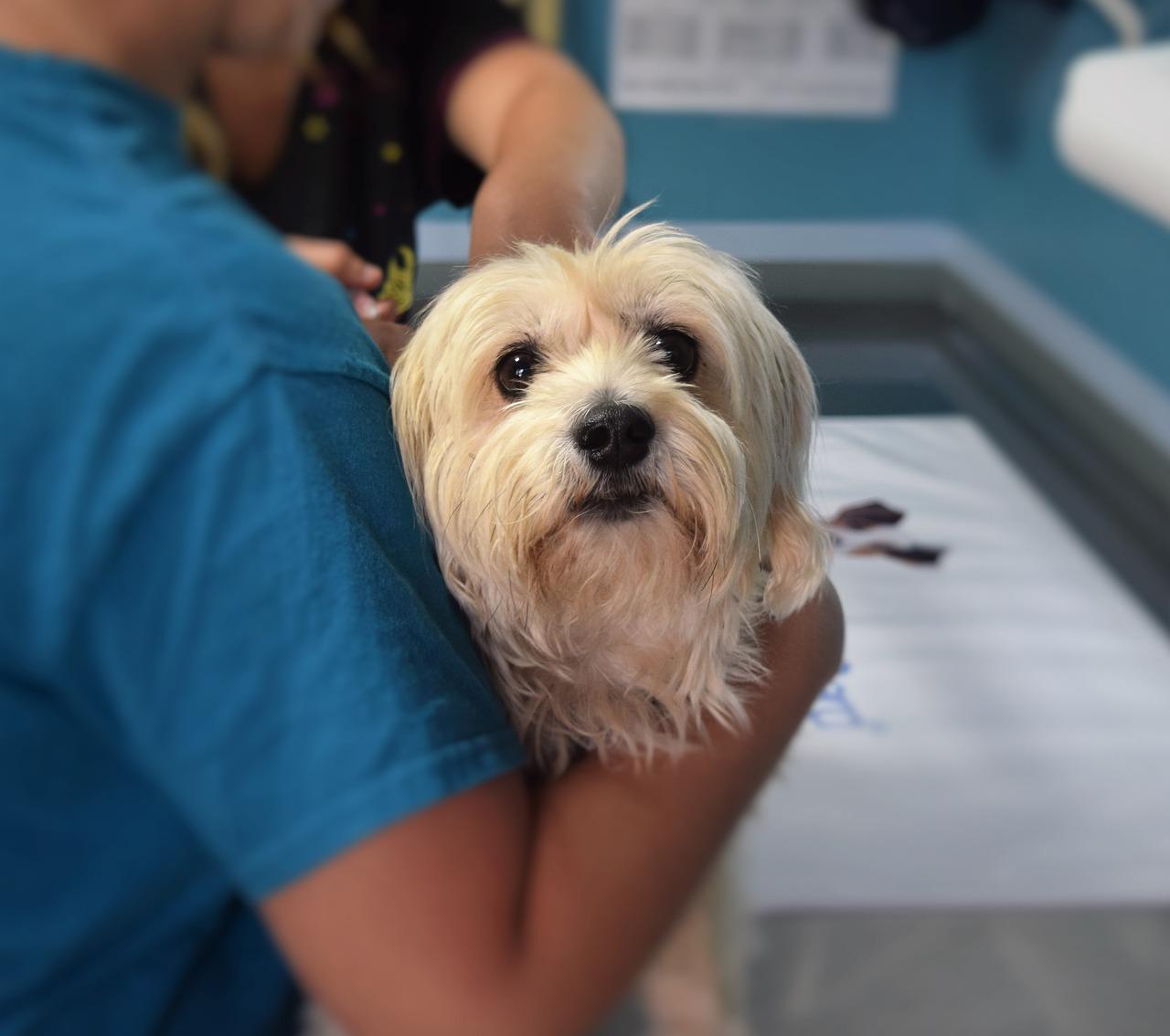 Få hjælp til din hund eller din kar på en professionel dyreklinik